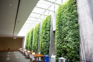 The green walls of the Healey Family Student Center with chairs and tables underneath them