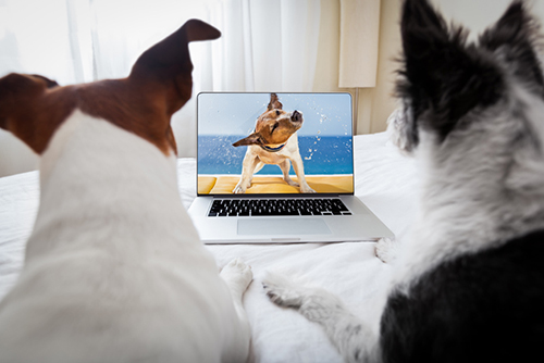 Two dogs appearing to watch a dog on TV